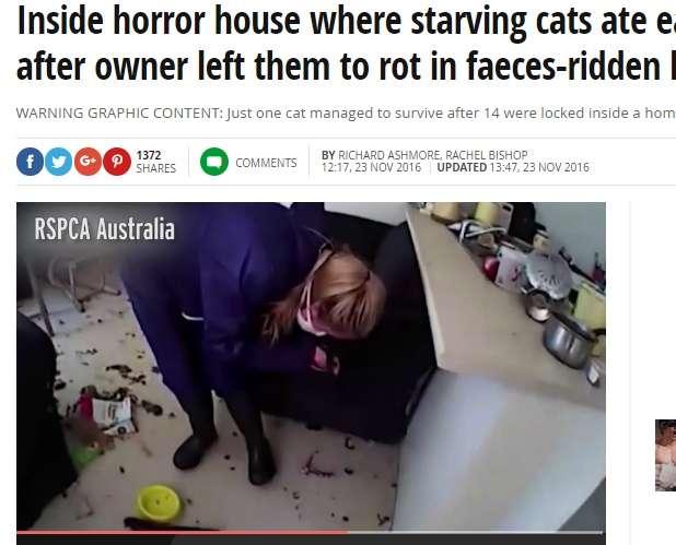 <閲覧注意>ネコ14匹を室内に閉じ込め放置、共食いで多くが食べ尽くされる(豪)