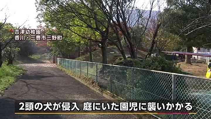幼稚園に猟犬2頭侵入、園児と園長かまれけが News i - TBSの動画ニュースサイト