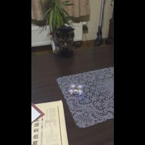 猫が初めてドローンと遊んだ結果…… 見事な猫パンチで撃墜する動画が話題に - BIGLOBEニュース