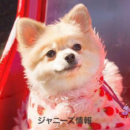 TOKIO城島が30年間で一番ブチキレた「うどんエピソード」がスケール小さすぎ | アサ芸プラス