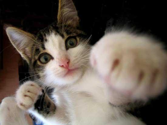 ご飯を待っている間に仲間をボコボコにする癖がついた猫