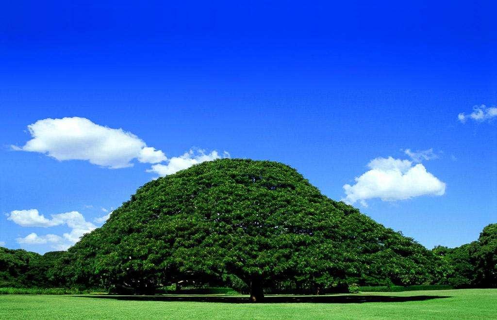 世界ふしぎ発見の「日立の樹」の維持費は年間約5千万円 草野仁が明かす