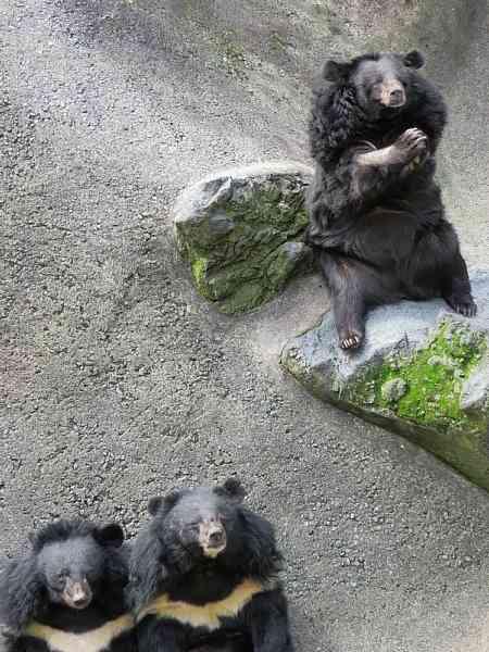 熊本県「阿蘇カドリー・ドミニオン」でクマ共食い エサ争い原因 - ライブドアニュース