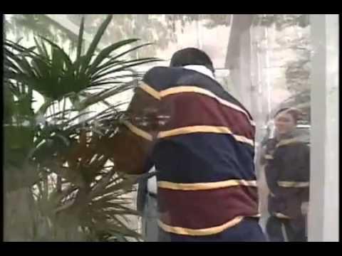 探偵ナイト!スクープ 52才カメムシ初体験 2 - YouTube