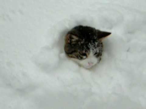 Elaine burrows in snow - YouTube
