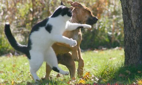 猫が初めてドローンと遊んだ結果… 見事な猫パンチで撃墜する動画が話題に