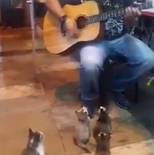 【動画】ストリートの弾き語りを熱心に聴く子猫さん達がなんかいいw