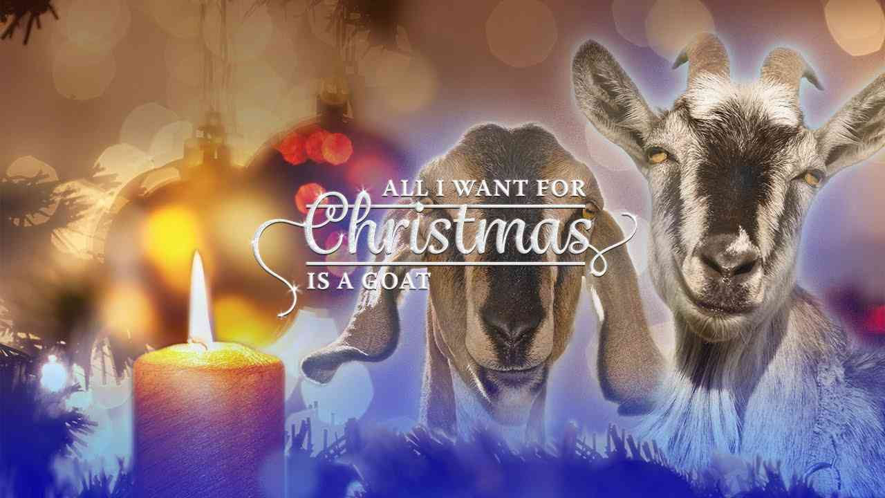 Silent Night (Goat Edition) - YouTube