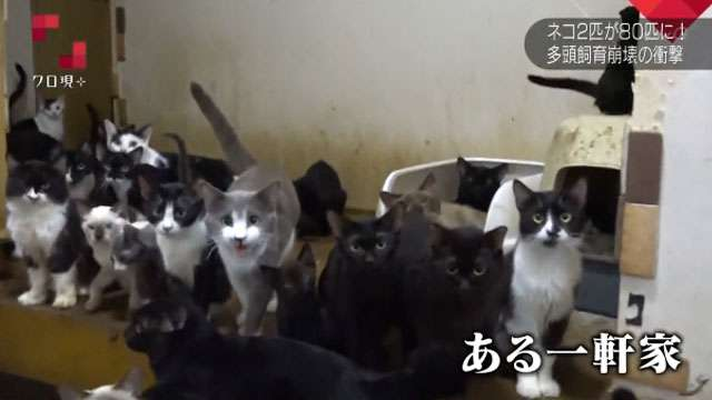 ネコに家が壊される~広がる ペット多頭飼育崩壊~クローズアップ現代プラス