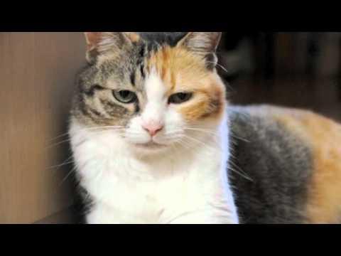 壁によりかかることに失敗した猫 a cat failed and felt awkward - YouTube