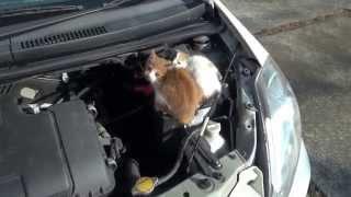 車のワイパーに張り紙があったのでボンネット開けてみたら…