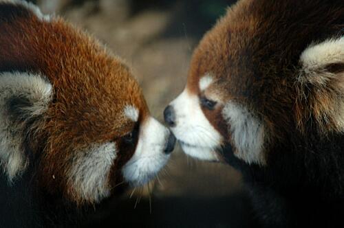キスする寸前の写真ください♡(〃∇〃)