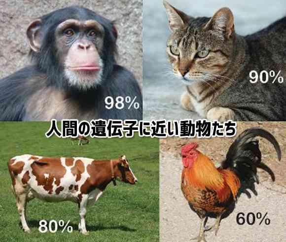 人間と遺伝子の構造が近い10のもの「あなたとバナナの遺伝子は60%同じ」
