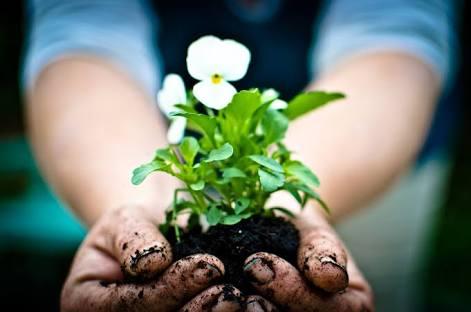 植物を育てるのが苦手な人
