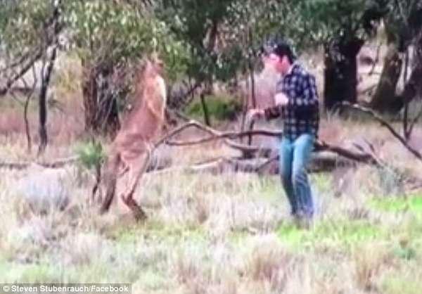 【アニメかよ】カンガルーが犬を羽交い締め→飼い主が勇敢に戦いを挑む動画が話題に|面白ニュース 秒刊SUNDAY
