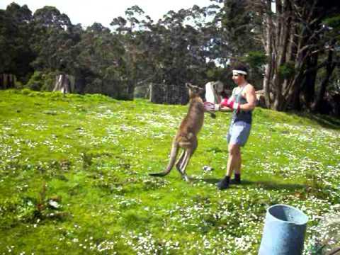 Man VS Kangaroo ROUND 2 - YouTube