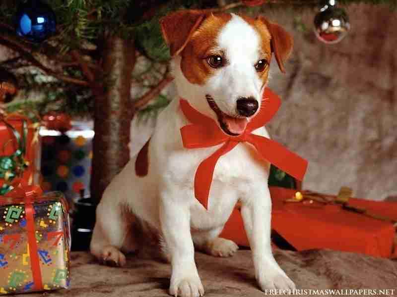 クリスマス×動物の画像が集まるトピ