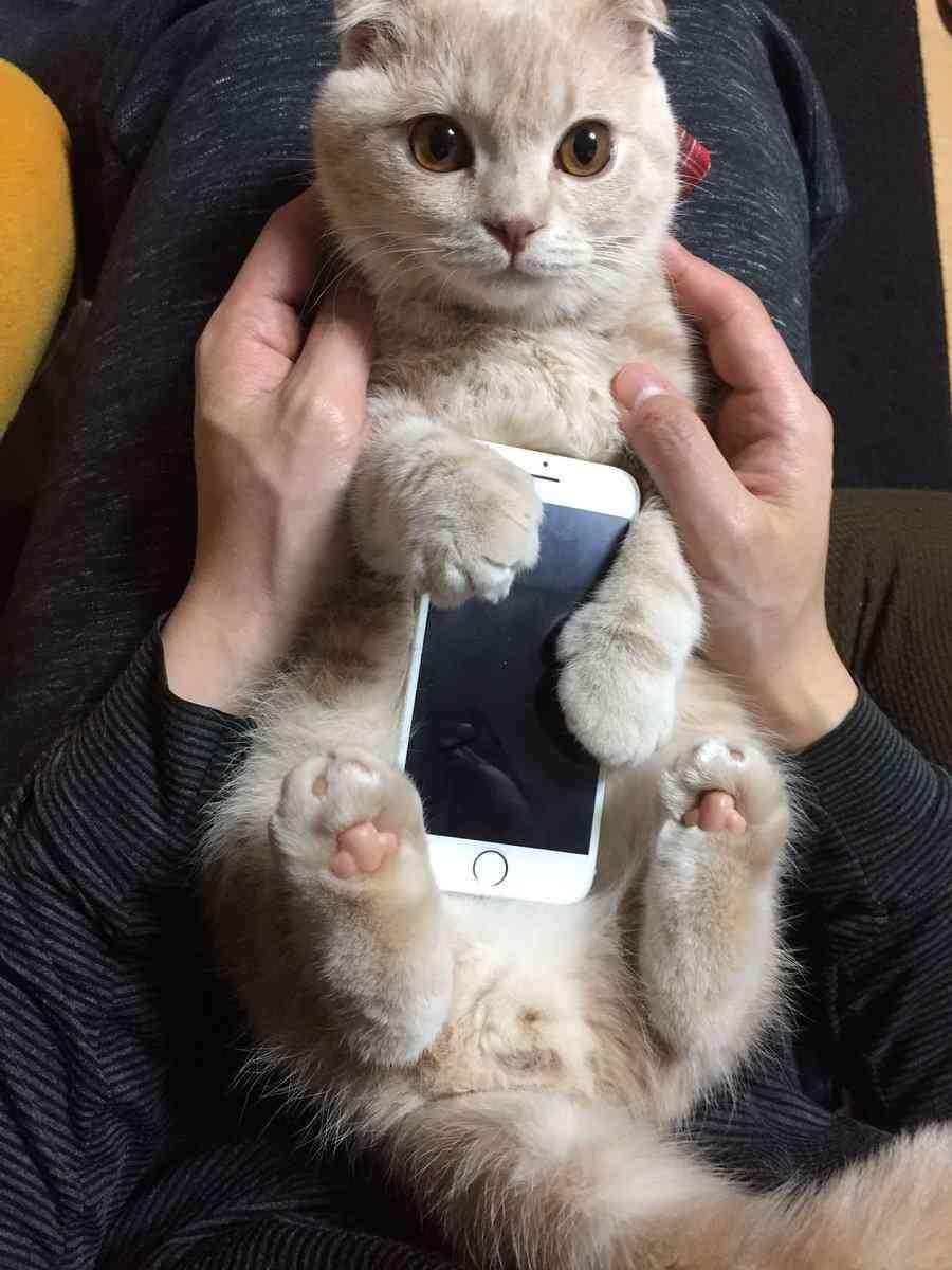 「どこで買えますか!?」一点もの、新発売のiPhoneケースが可愛すぎる