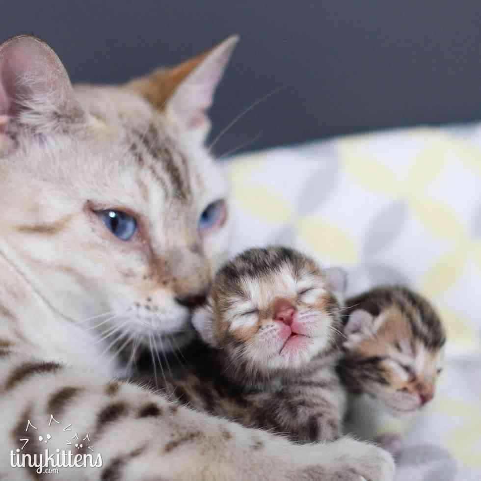 【もう離さない】悪徳ブリーダーから救われた母猫。子猫を強く抱きしめる姿に、胸が締め付けられる