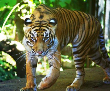 【画像】動物の笑顔を集めよう!