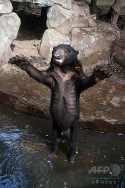 やせ細ったマレーグマを展示、インドネシア動物園に怒りの声 写真6枚 国際ニュース:AFPBB News