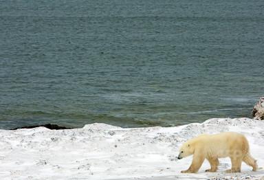 北極圏の海底から謎の音、動物も消えた? カナダ軍が調査へ 写真1枚 国際ニュース:AFPBB News