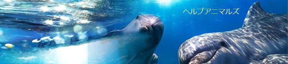 ヘルプアニマルズ | イルカ漁(イルカ猟) 詳細