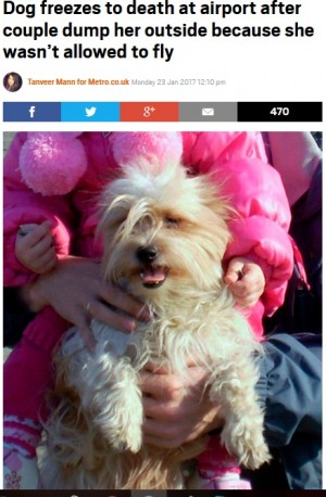 犬の搭乗を拒否された夫婦 空港の外に置き去りに凍死させる「悪魔のような夫婦」に制裁を求める署名集まる(露)