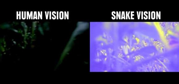 犬ビジョン、猫ビジョン、鳥ビジョン。動物たちはどんなふうに世界を見ているのだろう?