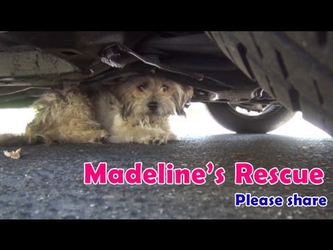 Abandoned dog rescued after being attacked by dogs or coyotes.  Please share. - YouTube