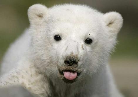 舌を出してる愛くるしい動物の画像ください