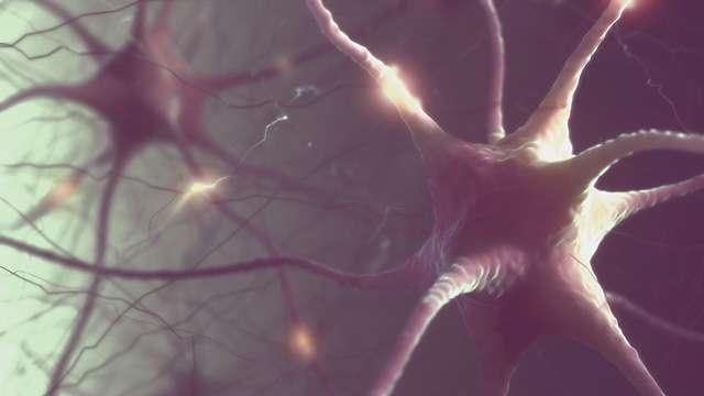 65歳以上でも脳機能が20代の17人を研究 彼らと普通の人との違いが判明 (2017年1月15日掲載) - ライブドアニュース