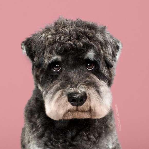 スタイリストのヘアカットで変身した犬たちのビフォーアフター画像