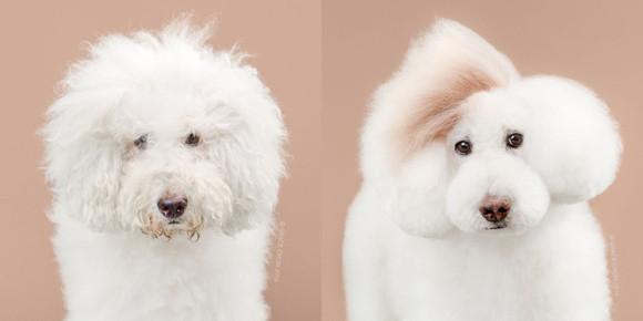 似合うヘアスタイルはひとつじゃないから。スタイリストが手掛けた犬たちの変身画像。 : カラパイア