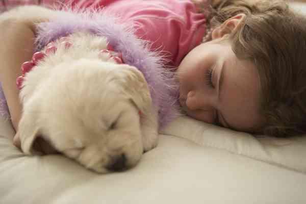 犬や猫の80%がバカンス前に捨てられる。フランスの休暇事情 | MYLOHAS