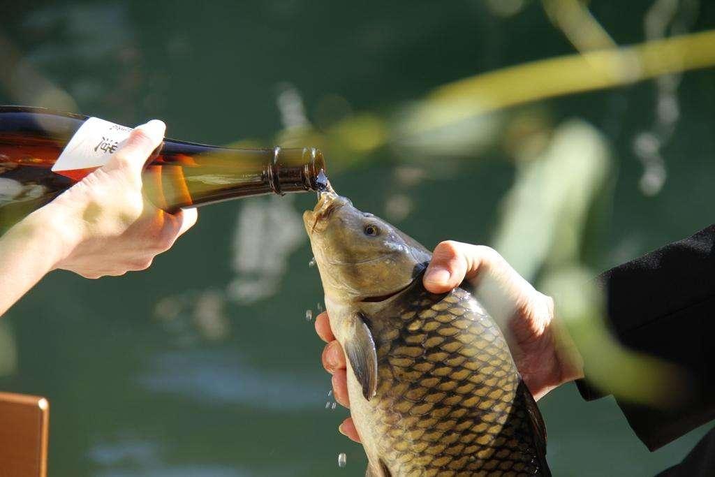 魚に酒を飲ませる新年の伝統行事がネット上で批判「虐待にしか見えない」