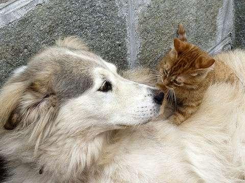 犬猫2万匹、流通過程で死ぬ…国内流通で初の実数判明