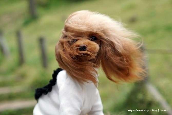 風の強い日にありがちな事