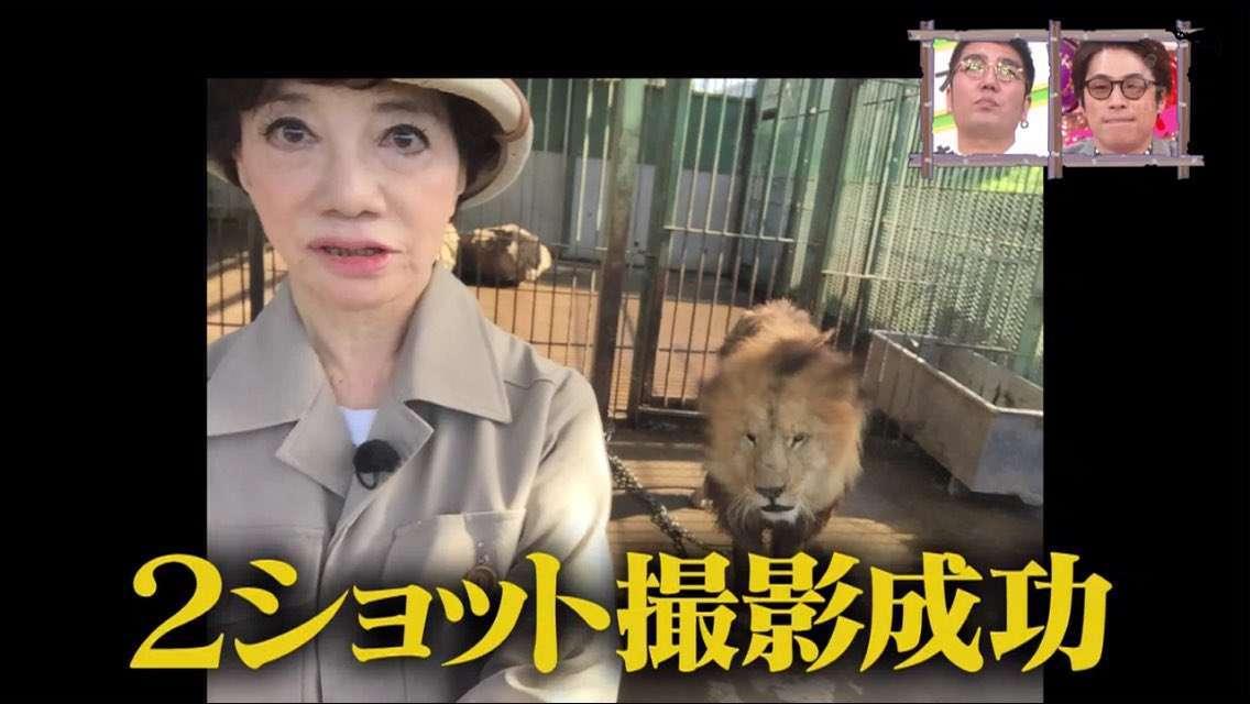 「ネコ科は濡れるのを嫌がる」ライオンに噛まれ飼育員2人が重症