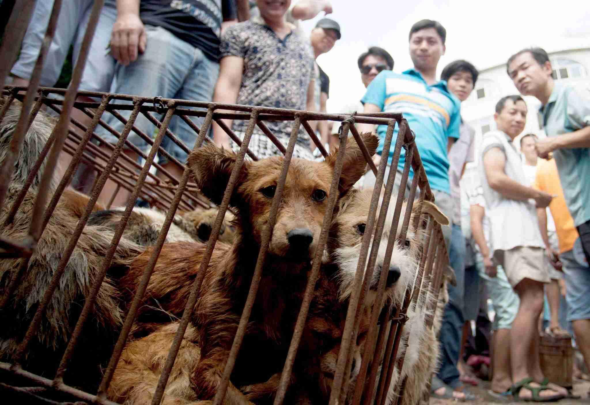 「犬食」は伝統文化か動物虐待か 世界中で物議を醸す中国恒例の犬食祭 | newStory(ニューストーリー)