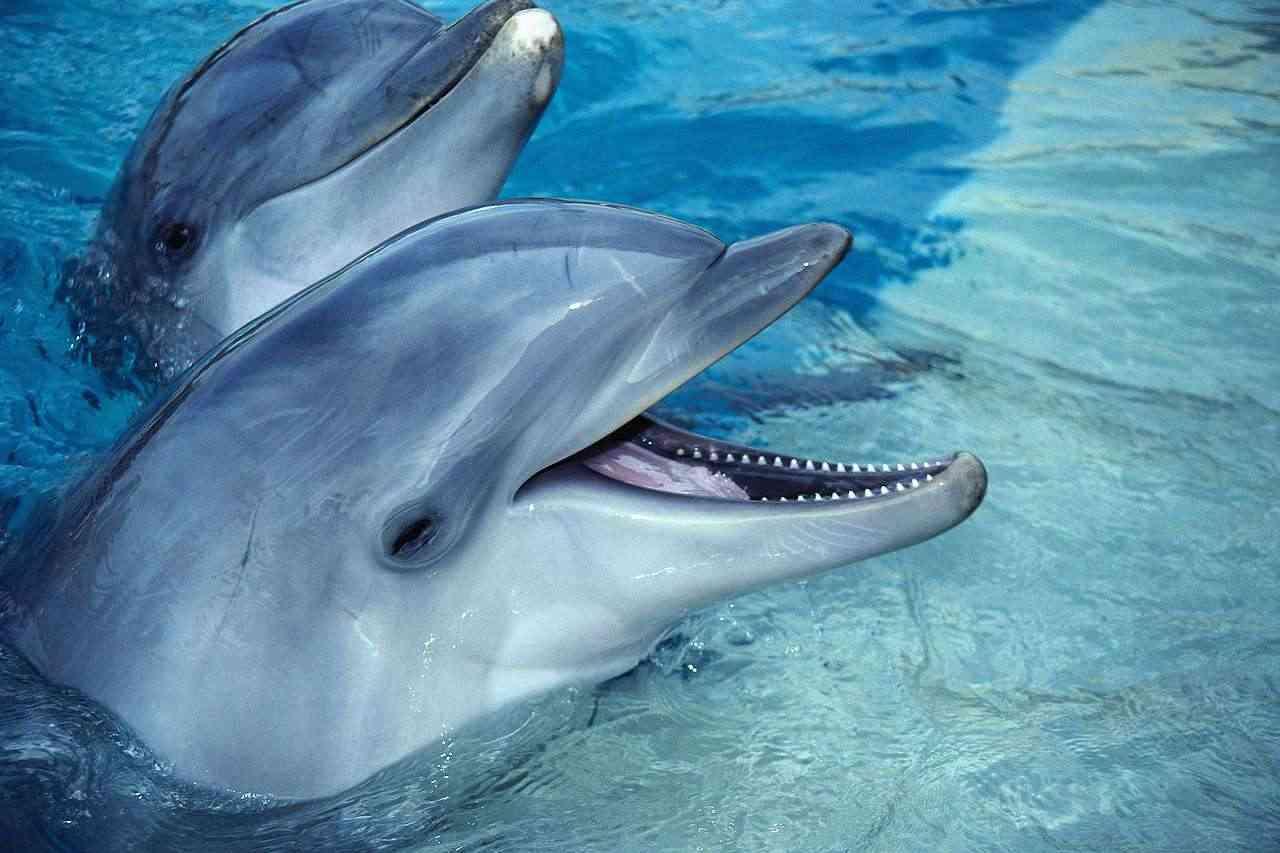 「イルカは凶暴で頭も良くない」研究者の報告→「頭がいいから保護すべき」と言う保護論者が騒然