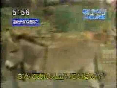 ショッキング!! ライオンに襲われた飼育員の断末魔(日本) - YouTube