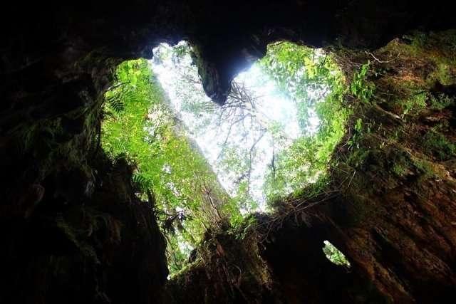 小林麻央の手術が成功で余命よりもQOLを優先!ブログで奇跡を誓う  |  Light and Shade 〜 人生の光と陰 〜