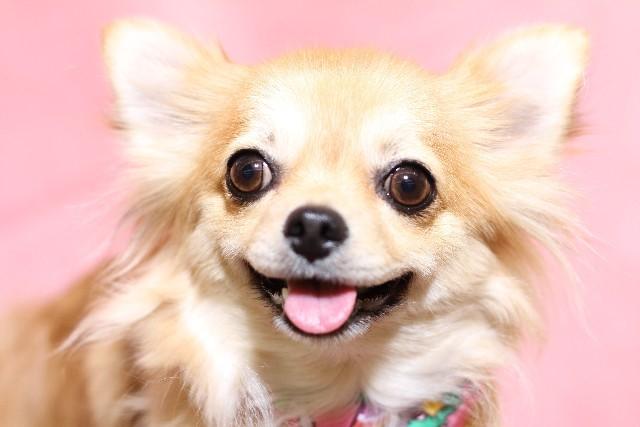 <チワワがトリミング中に転落死>ペット店の管理怠慢認定 42万円を支払うよう命じる判決