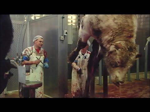 Unser Täglich Brot いのちの食べかた 「近代的な屠場」 - YouTube