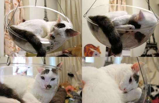 """全愛猫家の""""猫を全方位ウォッチング""""願望が叶うかも? 透明猫ベッドがクラウドファンディング中"""