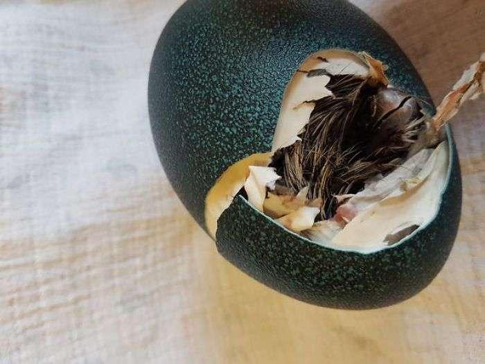インターネットで約3千円の謎の卵を買ったら、レアな鳥が孵化した話