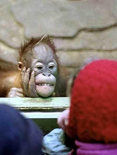 動物園ってどう思いますか?