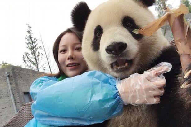 【あざとすぎ】美人と「自撮り」を楽しむパンダが話題に
