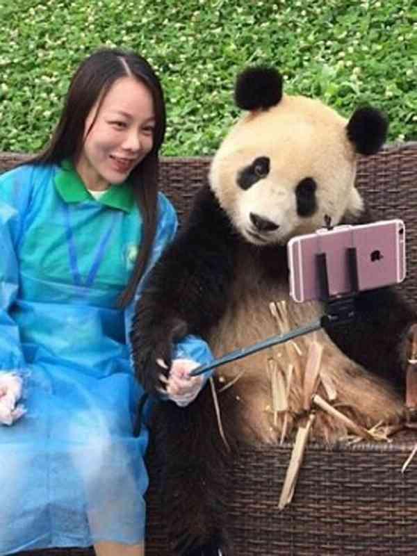 【あざとすぎ】美人と「自撮り」を楽しむパンダが話題に|面白ニュース 秒刊SUNDAY
